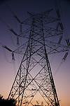 Hanuman Langurs on Electricity Pylon at Dusk, Udaipur