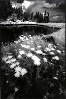 White flowers beside an alpine lake<br />