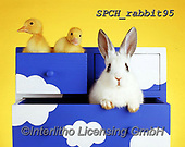 Xavier, ANIMALS, REALISTISCHE TIERE, ANIMALES REALISTICOS, photos+++++,SPCHRABBIT95,#a#, EVERYDAY ,rabbit,rabbits