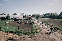 racing the cows<br /> <br /> 92nd Schaal Sels 2017 <br /> 1 Day Race: Merksem > Merksem (188km)