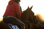November 3, 2020: Lady Prancealot, trained by trainer Richard Baltas, exercises in preparation for the Breeders' Cup Filly & Mare Turf at Keeneland Racetrack in Lexington, Kentucky on November 3, 2020. Carolyn Simancik/Eclipse Sportswire/Breeders Cup