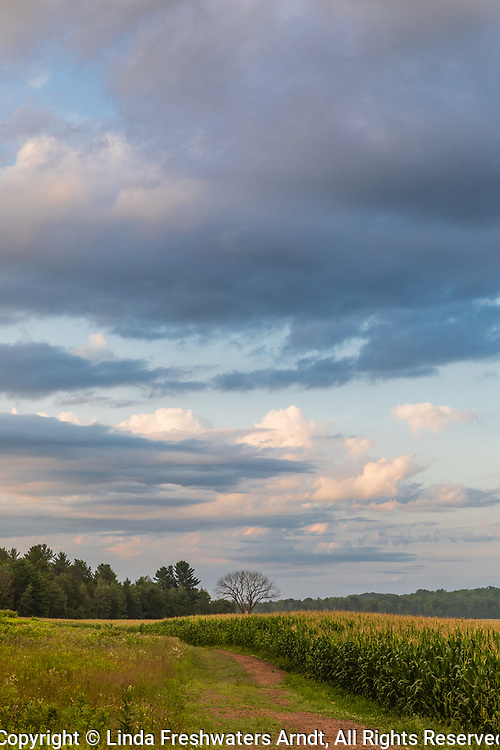 Early morning light illuminating a farm field in northern Wisconsin.