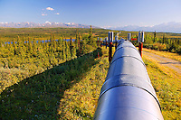 The Alaska Pipeline looking towards the Alaska Range, Alaska