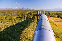 The Alaska Pipeline looking towards the Alaska Range, Alaska