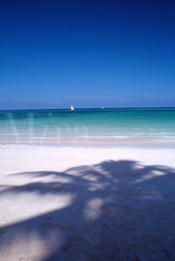 Zanzibar Shadows of coconut trees and Dhows boats along the beach at Kiwenga