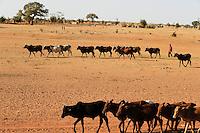 BURKINA FASO Djibo, Hirte mit Rinderherde auf dem Weg zu einer Wasserstelle /<br /> BURKINA FASO Djibo, shepherd with cows on the way to water place