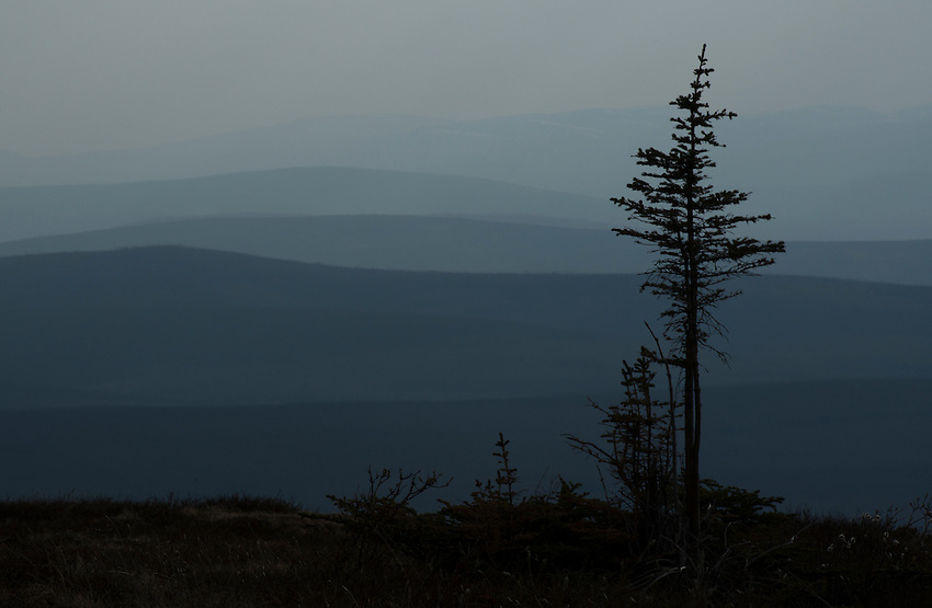 Smoke and haze from fires burning in Southcentral Alaska makes it way far into the interior, seen here just outside the community of Chicken.