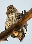 Giant bird stares at photographer by Decker Nomura