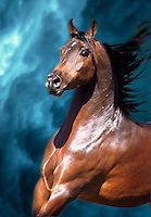 Arabian stallion runs with mane flowing.
