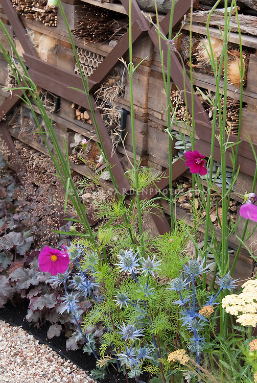 Insect & Bird haven for beneficials in garden with heuchera, Eryngium blue flowers, cosmos, providing materials for bird and insect nesting to attract wildlife to the garden