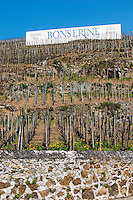 Sign painted black on white Grand Vin Bonserine Cote Brune. Terraced vineyards in the Cote Rotie district around Ampuis in northern Rhone planted with the Syrah grape. Ampuis, Cote Rotie, Rhone, France, Europe