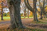 Maple-lined lane at tthe Spencer-Peirce-Little Farm in Newbury, Massachusetts, USA