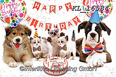 Interlitho-Alfredo, REALISTIC ANIMALS, REALISTISCHE TIERE, ANIMALES REALISTICOS, photos+++++,dogs, party,KL16584,#a#, EVERYDAY