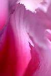 Pinks / Magentas