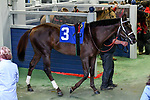 February 27, 2021 #3, Last Samurai in the paddock for the Southwest Stakes (Grade III) at Oaklawn Racing Casino Resort in Hot Springs, Arkansas. Ted McClenning/Eclipse Sportswire/CSM