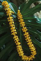 Puakenikeni lei, a beautiful and fragrant Hawaiian tradition