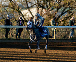 November 4, 2020: Essential Quality, trained by trainer Brad Cox, exercises in preparation for the Breeders' Cup Juvenile at Keeneland Racetrack in Lexington, Kentucky on November 4, 2020. Scott Serio/Eclipse Sportswire/Breeders Cup