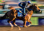 ARCADIA, CA - NOV 03: Accelerate, owned by Hronis Racing LLC and trained by John W. Sadler, exercises in preparation for the Breeders' Cup Las Vegas Dirt Mile at Santa Anita Park on November 3, 2016 in Arcadia, California. (Photo by Scott Serio/Eclipse Sportswire/Breeders Cup)
