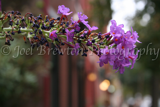 Flowers bloom up and down the streets and gardens in the Mexican War Streets of Pittsburgh's North Side.
