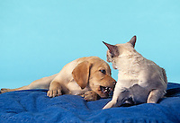 Dog and cat.