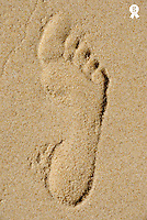 Footprint in sand on beach, close-up (Licence this image exclusively with Getty: http://www.gettyimages.com/detail/73013965 )