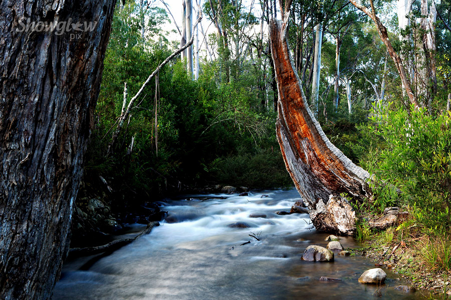 Image Ref: T062<br /> Location: Cathedral Range State Park<br /> Date: 16/08/15