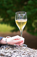 A hand holding a champagne glass flute on a stone wall with the Cuvee 729, Champagne Jacquesson in Dizy, Vallee de la Marne, Champagne, Marne, Ardennes, France