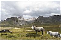 2 Tibetan horses on high mountain.