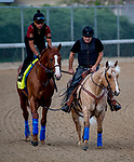 LOUISVILLE, KY - MAY 02: Horses walk onto the track for morning workouts in preparation for the Kentucky Derby at Churchill Downs on May 2, 2018 in Louisville, Kentucky. (Photo by John Vorhees/Eclipse Sportswire/Getty Images)