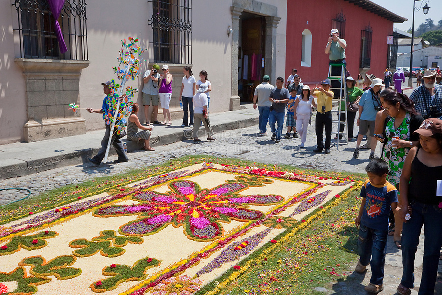 Antigua, Guatemala. The makers of an alfombra (carpet) provide a ladder from which admirers can get a better photo of the artists' handiwork.   An alfombra (carpet) of flowers and pine needles  decorates the street in advance of the passage of a procession during Holy Week, La Semana Santa.  The alfombra will be finished only a couple of hours before the passage of the procession, after which the remains will be quickly swept away by municipal street sweepers.