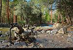 Yosemite Creek below John Muir Cabin Site, Yosemite National Park