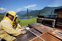 Switzerland. Canton Ticino. Castello di Vico Morcote. Joao seats on the back of the pick-up truck from Alberto Bianchi, a beekeeper and an organic farmer (with the label Bio Suisse). They are moving and carrying hives to to another location. Beekeeping (or apiculture) is the maintenance of honey bee colonies, commonly in hives, by humans. View on the mountains and the lake Lugano ( also called Lago Ceresio). 30.05.12 © 2012 Didier Ruef