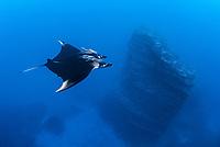 giant oceanic manta ray, Manta birostris, with remora, over lava rock pinnacle, San Benedicto Island, Revillagigedo Islands, Mexico, Pacific Ocean