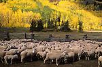 Sheep Ranch, San Juan Mountains, Colorado