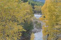 , Dolores, San Juan National Forest, Colorado, USA, September 2007