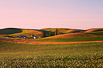 Dawn brings soft spring light to the hills and farms of the Palouse Hills.  Near Kamiak Butte and the town of Palousse.