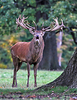 OCT 16 Woburn Deer Park