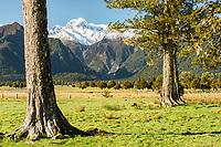Farmland near Fox Glacier village with mountains Southern Alps in background, Westland Tai Poutini National Park, UNESCO World Heritage Area, West Coast, New Zealand, NZ
