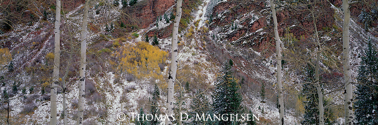 A canyon near Aspen, Colorado is painted with intricate detail and all the colors of the natural world.