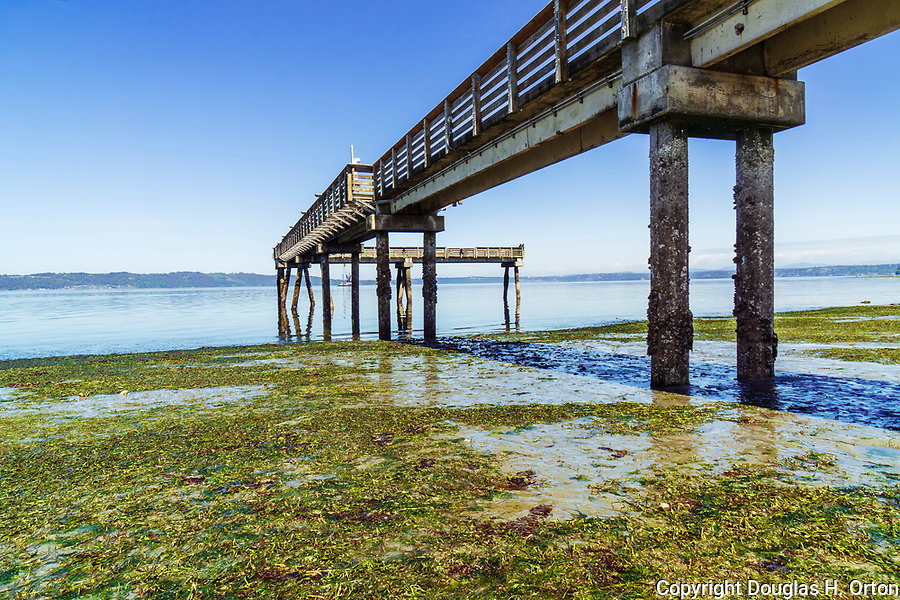 Under the pier, Low tide reveals eel grass  beach at Dash Point Park, on Puget Sound.  A City of Tacoma Metro Parks park near Dash Point State Park.  Dash Point is a historic Mosquito Fleet steam ship stop.