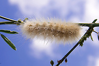 Caterpillar against a blue sky