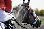 18 October 2009: Misleader takes in his surroundings before the start of the 4th race at Keeneland.