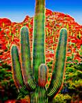 Saguaro #26