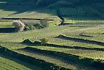 Germany, Baden-Wurttemberg, Oberrotweil at Kaiserstuhl: terraced wine growing region | Deutschland, Baden-Wuerttemberg, Oberrotweil am Kaiserstuhl: terrassenartig angelegtes Weinanbaugebiet