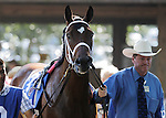 Havre de Grace walks in the paddock with trainer Larry Jones before the Delaware Handicap, in which she finished a close second to Blind Luck.  (Joan Fairman Kanes/Eclipsesportswire)