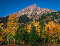 749450360 fall colored aspens populous tremuloides frame the tetons along the main road in grand tetons national park wyoming