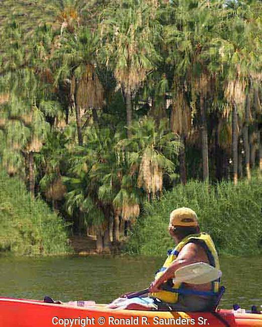 Man sails in kayak past palm trees