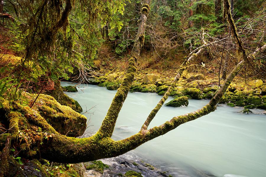 Boulder River flowing through old growth forest, Boulder River Wilderness, Central Cascades, Washington, USA