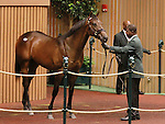 September 10, 2014: Hip #453 War Front - Aristocratic Lady colt consigned by Vinery Sales sold for $700,000 at the Keeneland September Yearling Sale.   Candice Chavez/ESW/CSM