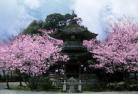 Collage of a pagoda building framed by cherry blossoms with guardian lions in the sky above. Kyoto, Japan.